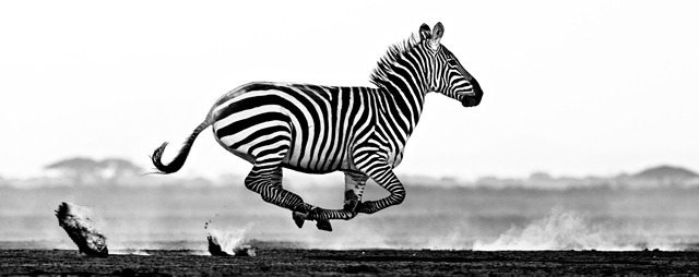 DAVID-YARROW-Desert-Flight-Amboseli-KenyaTB