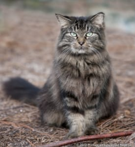 CATS - pearlman photo